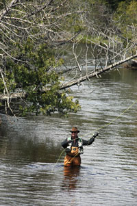 A fly angler on the South Branch of the Au Sable River in the Mason Tract.