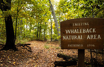 Entering Whaleback Natural Area.