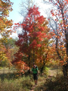 Fall colors along the Jordan River Pathway.